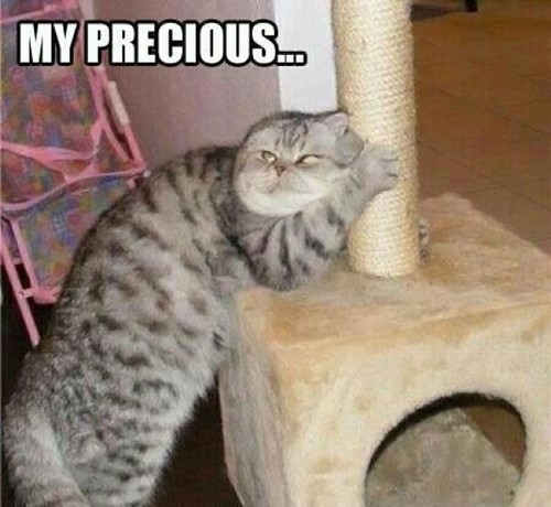 cat-humor-funny-my-precious-scratch.jpg