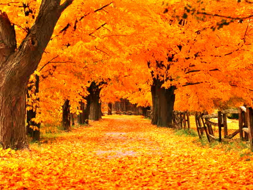 Gold_Autumn_Wallpaper_l2gkp.jpg