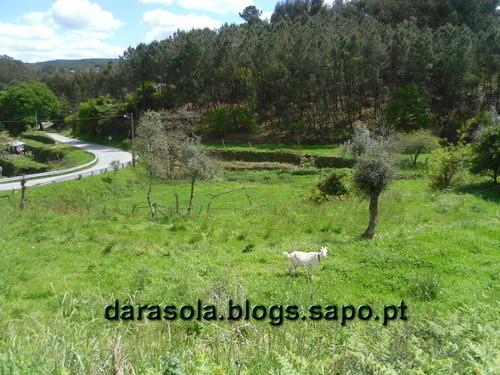 Rota_do_Gaia_03.JPG