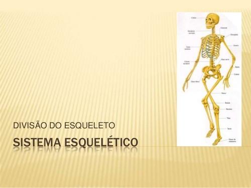 sistema-esqueletico-divisao-do-esqueleto-1-638.jpg