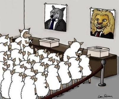 Sheep-On-Voting-For-a-Lion-Or-a-Wolf-On-Election-D