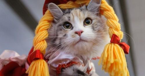 5mai2012---gato-fantasiado-posa-para-foto-durante-