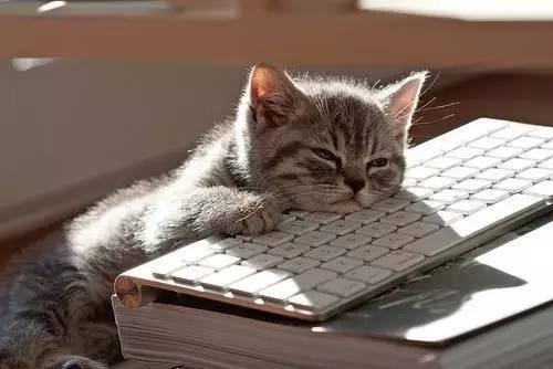 gatinho_cansado.jpg