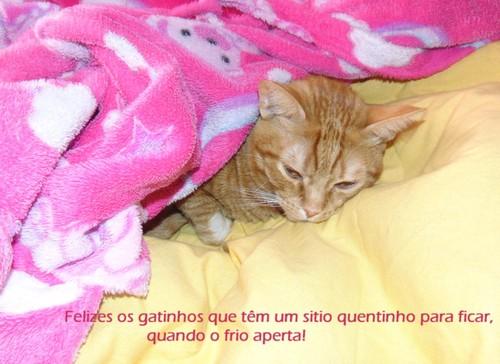 gatinhosfelizes.JPG