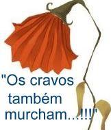 cravo_murcho.jpg