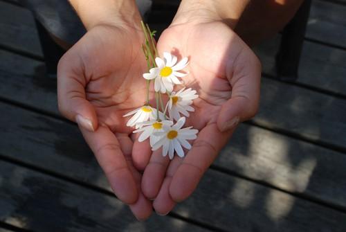 flower-22656.jpg