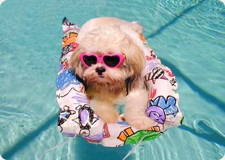 cachorro-piscina_thumb.jpg