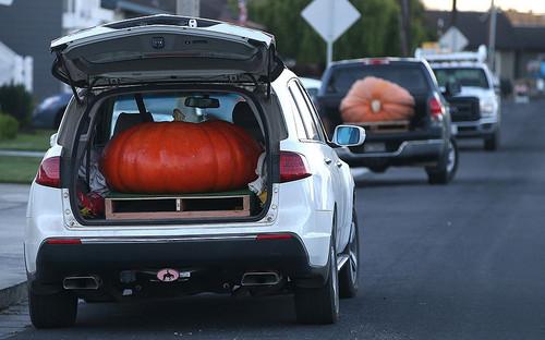 POTD_Pumpkin_Fest_3071654k.jpg