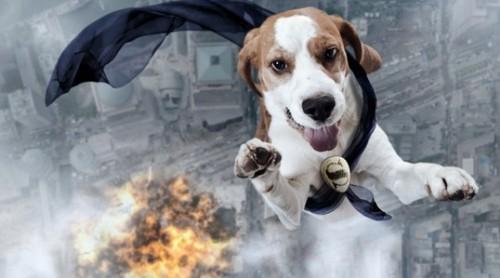 cachorro-heroi-salva-crianca-do-frio_0.jpg