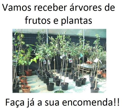 Arvores de fruta.jpg