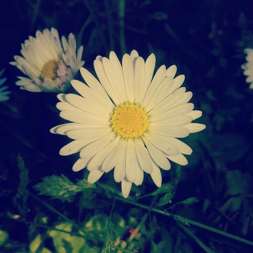 34_A3C_Flor.jpg