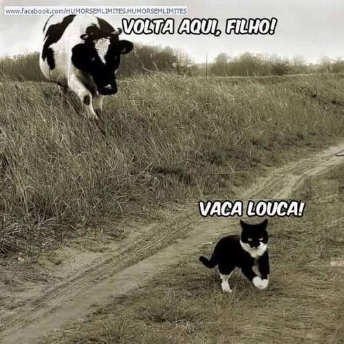 vaca louca.jpg