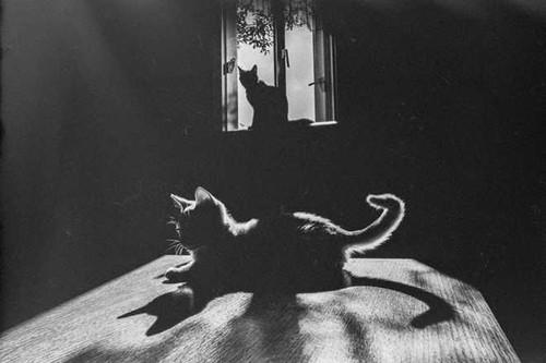 GALERIA_gatos_cat-11.jpg