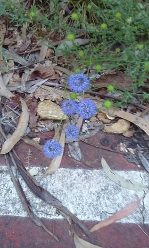 flores_ecopista_4.jpg