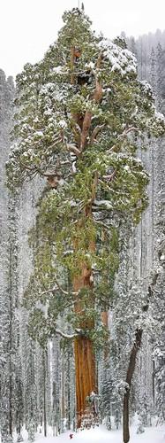 77205-880-1447278247amazing-trees-20.jpg
