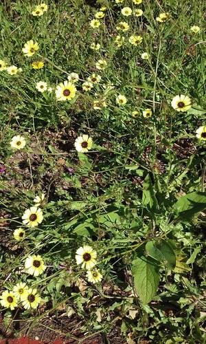flores_ecopista_3.jpg