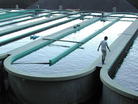 Aquacultura.jpg