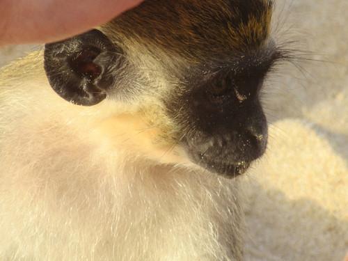 macaco#2.JPG