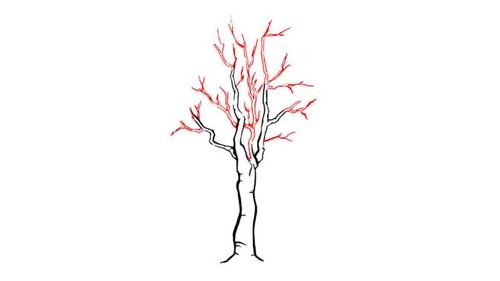 670px-Draw-a-Detailed-Tree-Step-4-preview.jpg