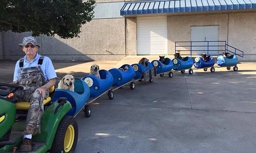 cães_em_locomotiva.jpg
