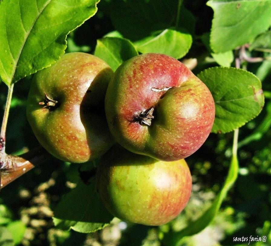 fruto1865828251.jpg