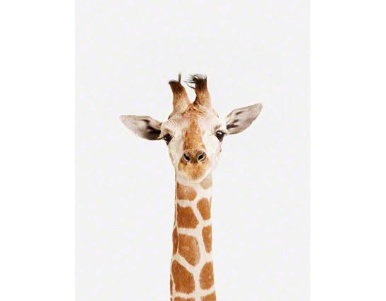 Baby-Giraffe_art-for-nursery-01.jpg