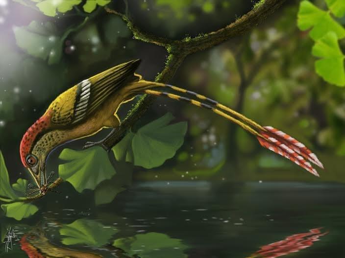 A ave mais antiga do Brasil 01.jpg