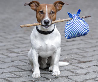 05-02-animais-perdidos-Shutterstock_Images.jpg