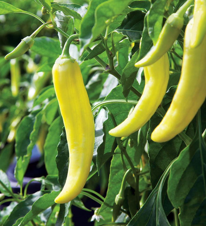 hot-banana-pepper.jpg