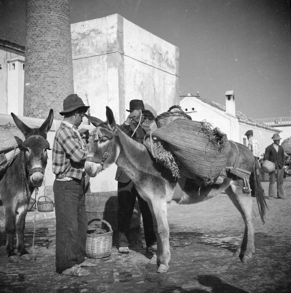 Carrego do burro, Algarve (A. Pastor, 1960-65)