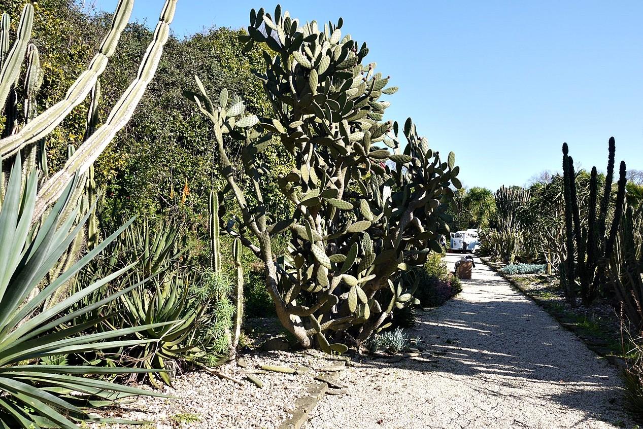 Jardim Botânico5.JPG