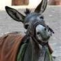 burro 1.jpg