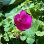 PhotoGrid_1478457808469.jpg