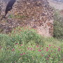 Ermida de Nª Sª de Guadalupe - Vila de Frades