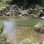 Rio Sardoura Amieira.jpg