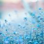 Florzinhas azuis.jpg