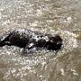 Elefante bebé toma banho no rio 2