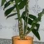 Orquídea Interior.jpg