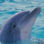 golfinho.jpg