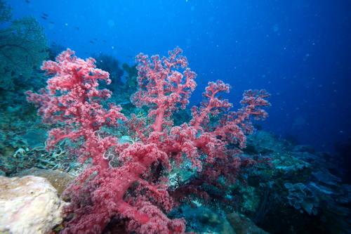 bareira_coral_noticia.jpg