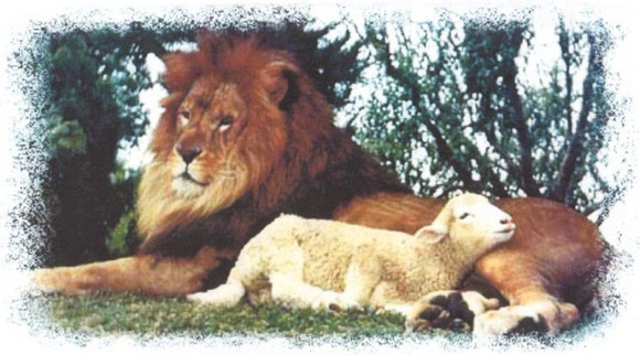 the-lion-and-the-lamb-god-the-creator-20210815-759