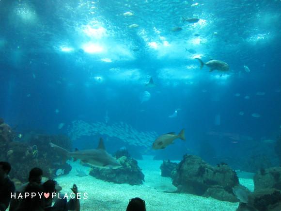 oceanario3.jpg
