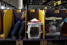 Bastidores Westminster Kennel Club Dog Show, EUA