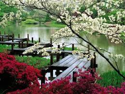 Jardim chines 7.jpg