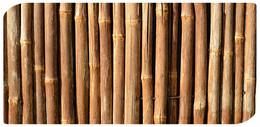 Bamboo (Imagem Pixabay)