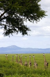 Park Katavi, Tanzânia