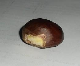 castanha (5)