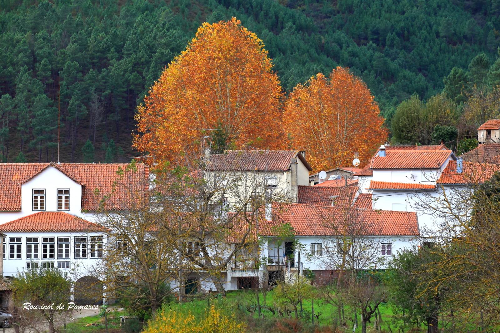 Outono em Pomares IV (1)