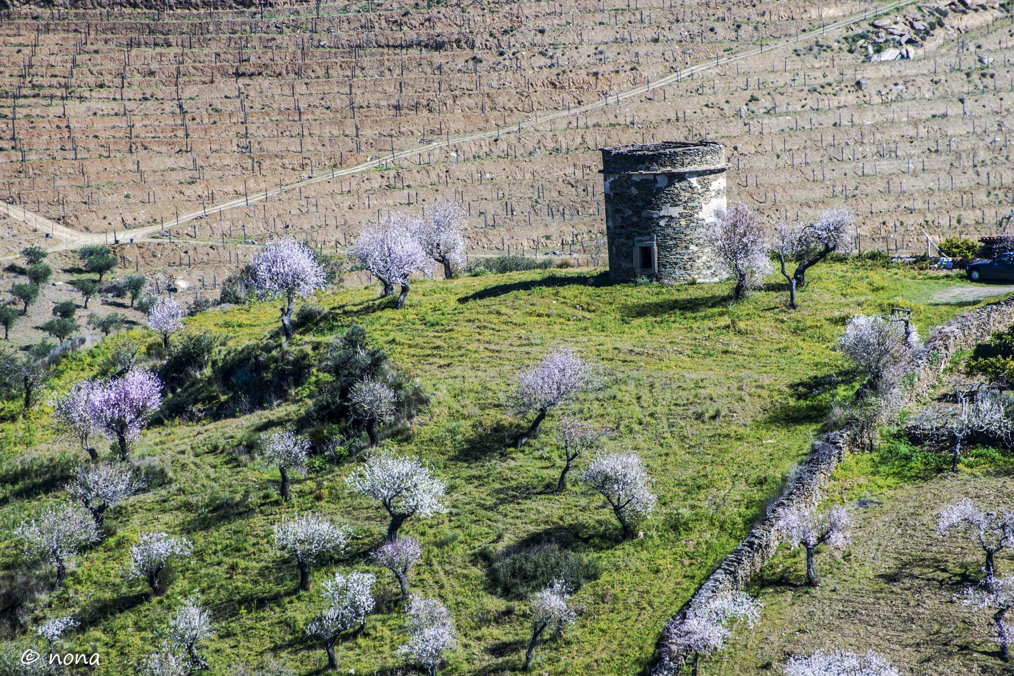 2015 - Rota das Amendoeiras (261).jpg