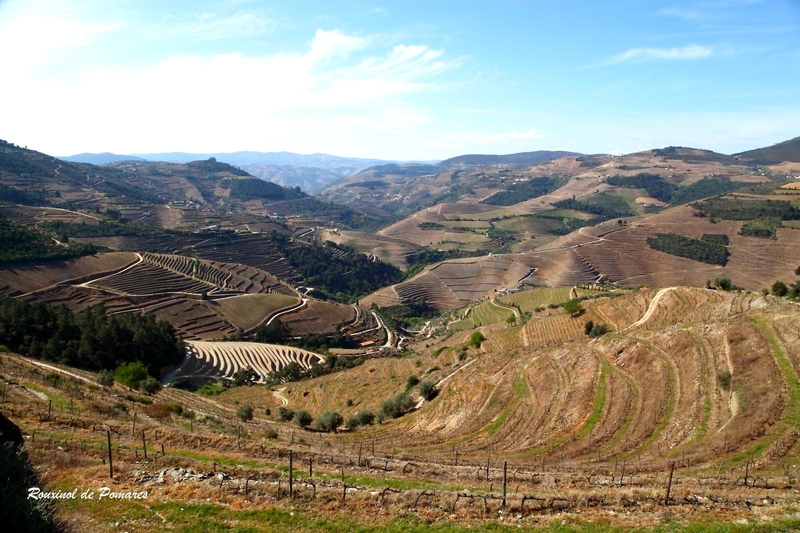 Vale do Douro - Pinhão